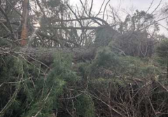 倒木などの台風被害について
